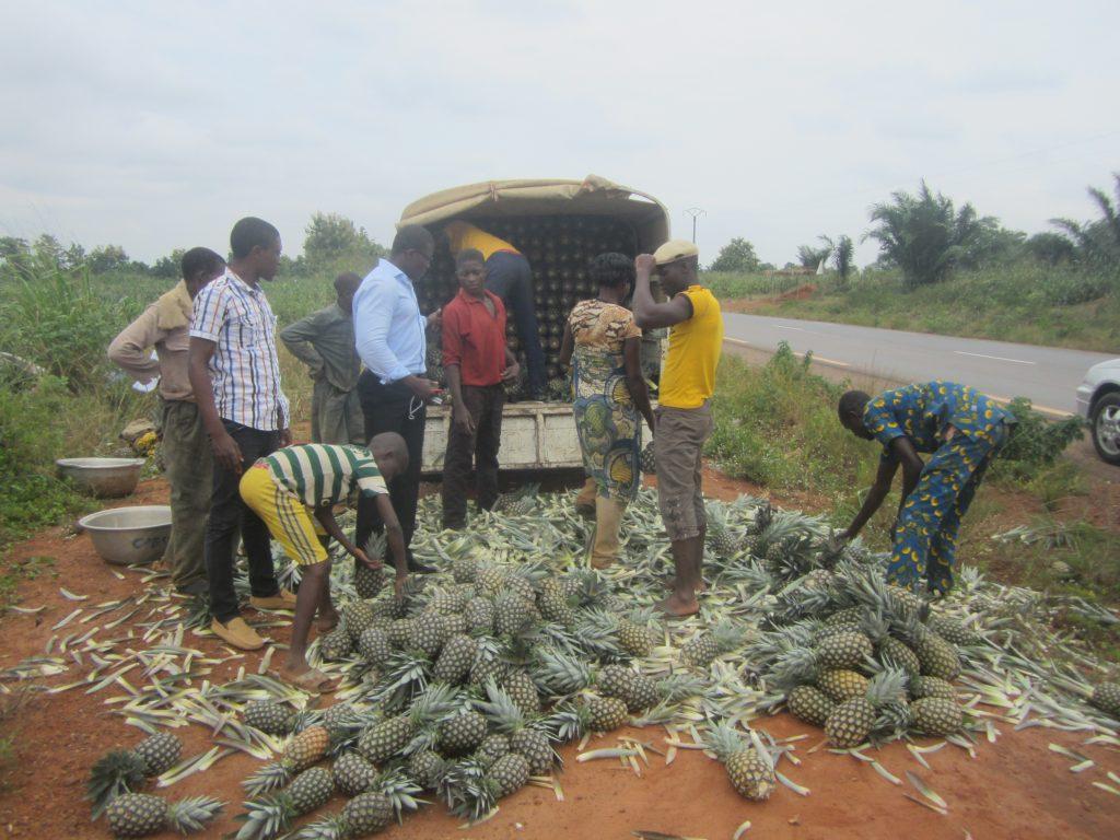 projet-ananas